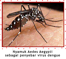 """aedes"