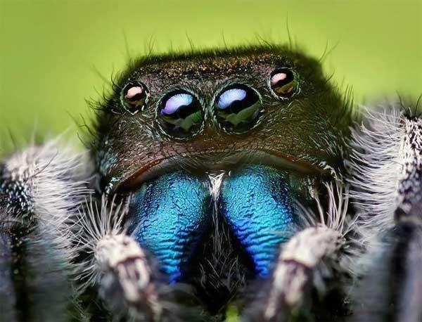 Dangerous Spiders