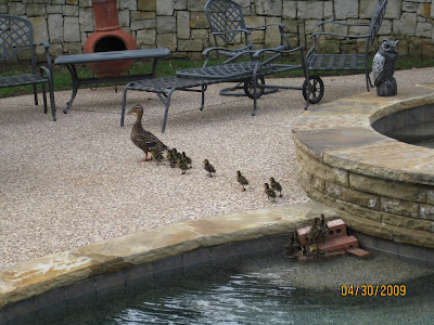 Mama+Duck >Help Judge the PHOTO Contest! You choose the TOP Pics entered!