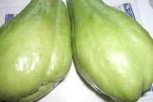 sayote (sechium edule)