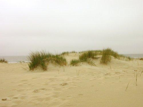 [beach_footprint_waves_280126_l.jpg]
