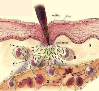 external image inflamatoria-muda.jpg
