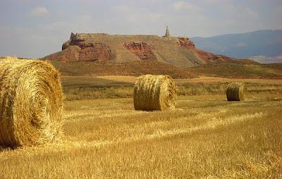 biomasa en la economia