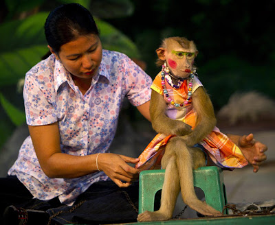 Monkey show in bangkok