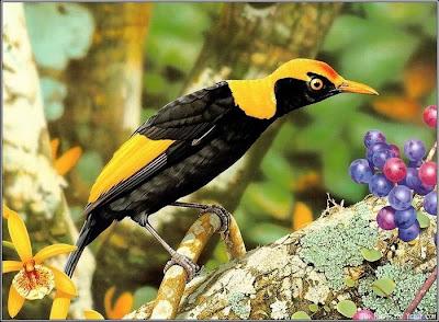 400 x 294 42 kb jpeg kuşlar yakın cekim kuş resimleri cok guezel