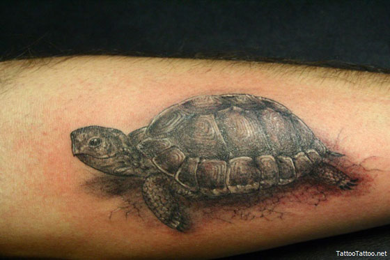 If you have ever seen some of the turtle tattoos out there, you probably