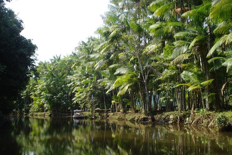 NossaCasa é preservação da Amazônia