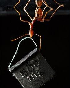 Foto+semut+angkat+beban+menang Beban Hidup yang Berat