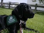 Puppy # 1: Meade