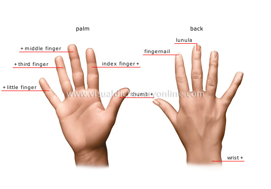 Mobile Monopoly: Men With Longer Index Fingers Than