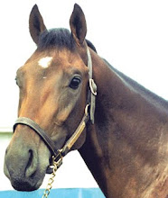 Deputy Minister - from the Canadian Horse Racing Hall of Fame