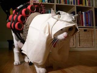 [Image: muslim+pussy+cat.jpg]