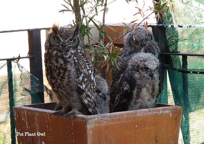 Caméras live 24/24 d'oiseaux Family