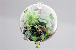 Tom&#39;s Terrariums and Glass Gardens