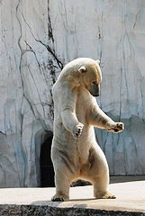 Ulli & Gerhard's Eisbären- Melderegister ...A Unique Polar Bear Studbook