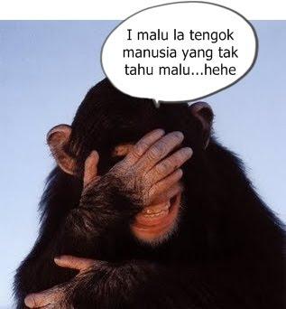 http://4.bp.blogspot.com/_SV8LDLw0w-Y/TDafOMjnNtI/AAAAAAAADaM/WzYGhHeFpW0/s320/monyet+malu.jpg