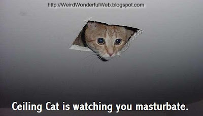Image-Ceiling cat