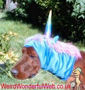 IMAGE: Dog dressed as unicorn
