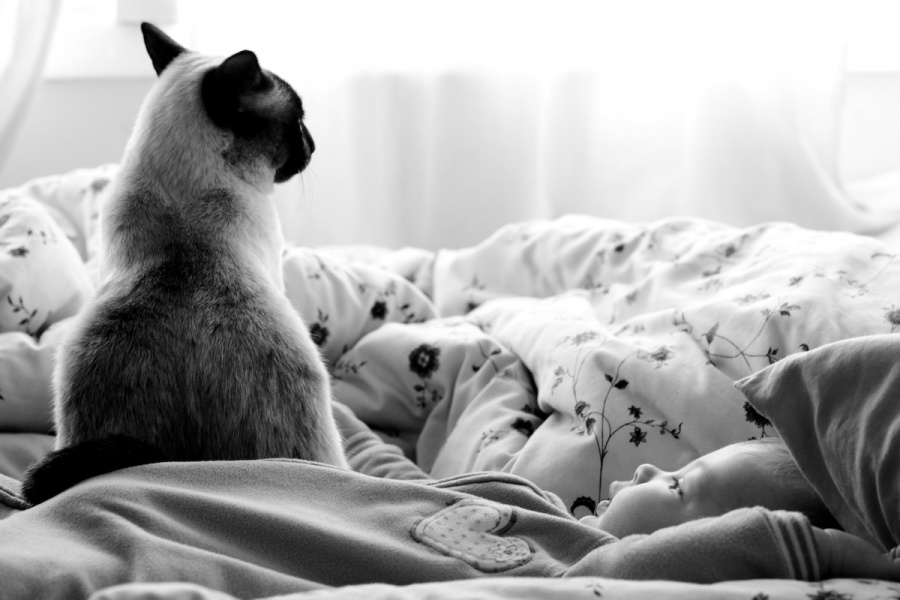 [Baby+and+the+Cat-3403.preview.jpg]
