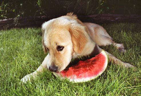 Can My Dog Eat Kiwi Fruit
