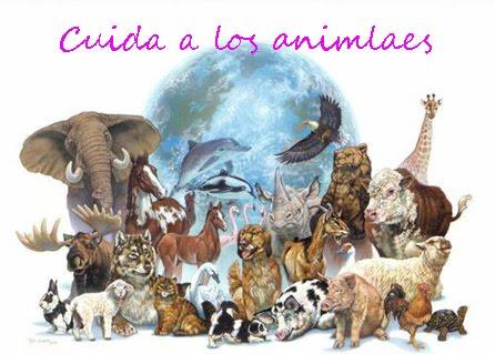 Amo los animales y tu?