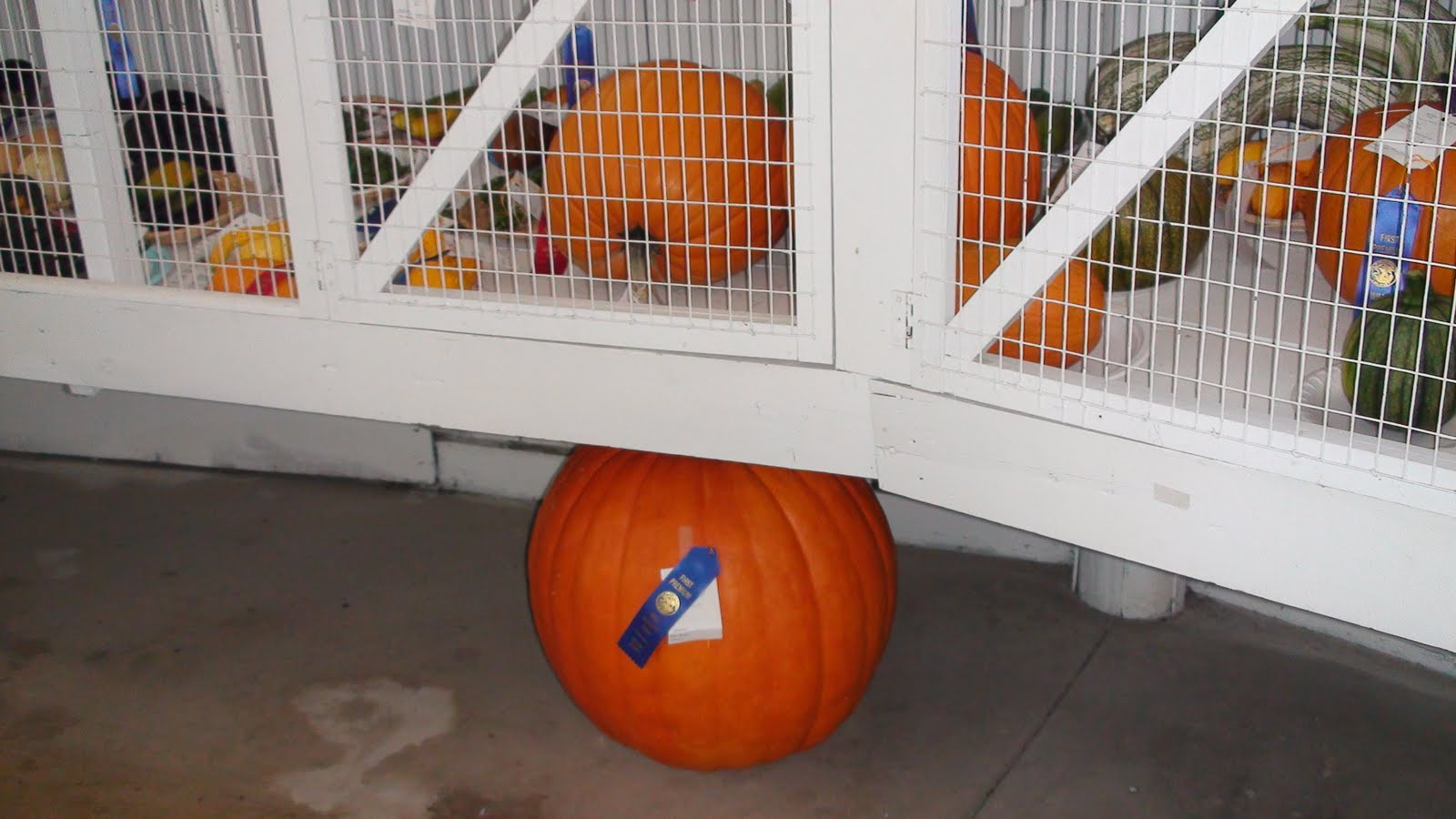 Illinois will county peotone - First Place Pumpkin At The Will County Fair
