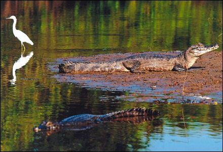 pantanal.jpg