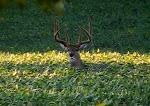 Monster Bucks & Creative Outdoors