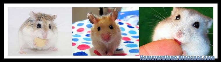 One-Stop Hamster Boarding!
