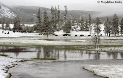 Yellowstone National Park after snowstorm