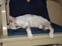 Gata Lili dormindo na cadeira da sala
