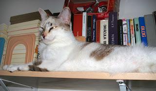 Gata Lili na estante de livros