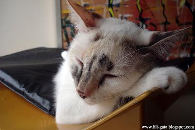 Gata Lili dormindo no telhado da casinha para gatos