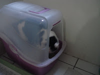 Gata Malu usando banheiro coberto