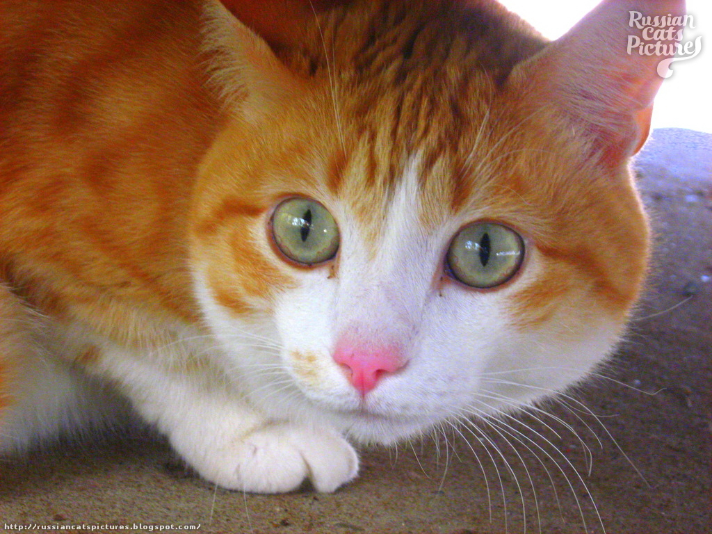 Scarry Ginger Kitty