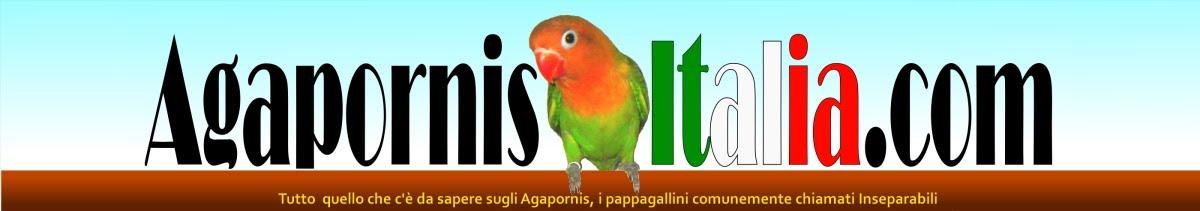 Il sito Italiano dedicato agli Agapornis o Inseparabili o Lovebirds!