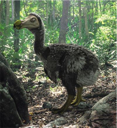 Qué fósil falta?? Modern_dodo