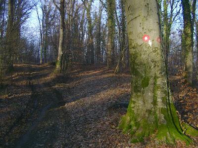 Staza 4 kroz šumu
