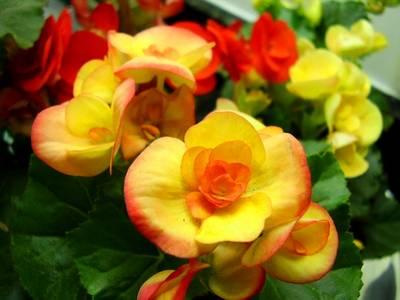 Ecologiayvida plantas ornamentales for Tipos de hojas ornamentales