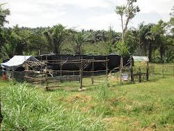 Kulai Farm In Memory