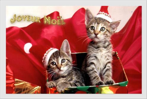 Le blog de yehni djidji joyeux noel - Les plus belles cartes de noel ...