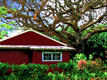 Old Koloa Town Blank Cards
