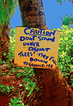 Coconut Caution Blank Cards