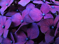 Grape Hydrangea Blank Cards