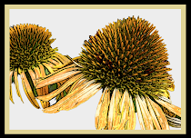 Ink Echinacea Blank Cards