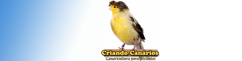 Criando Canários | Canaricultura para iniciantes