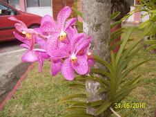 Bunga Orkid cantik....