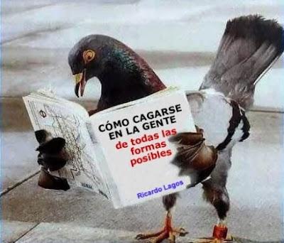 Las habilidades sociales de una paloma
