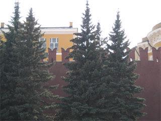 Елочки кремлевские