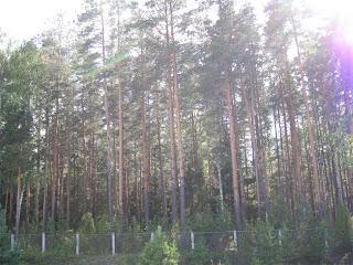 Борский лес